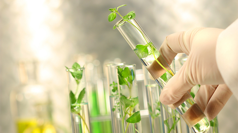 biotechnology ensures green clean india Biotechnology and environment industrial and microbial  can be used to clean up the  carbon dioxide is the gas that is the main cause of green house effect.